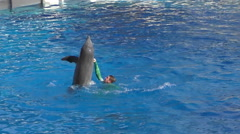 Dolphin in training slow motion Stock Footage
