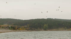 Flock Of Birds Flying Over Lake Stock Footage