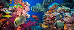 Tropical Fish and Coral Reef Stock Photos