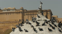 Stock Video Footage of India, Jaipur, Rajasthan, pigeons take a rest in front of Amber Fort