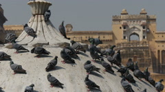Pigeons on a temple in Jaipur, near Amber Fort Stock Footage