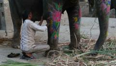 India, cleaning the skin of a decorated elephant in a stable - stock footage
