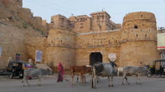 Typical India morning scene, sacred cows, historic fort, woman sweeping streets Stock Footage