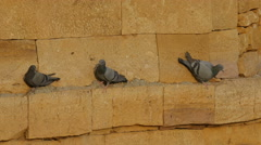 Three pigeons rest on a tower of the Jaisalmer Fort in India Stock Footage