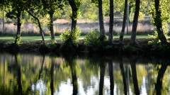 Reflection of trees in a river. Stock Footage