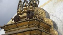 Monkeys at the Swayambhunath temple in Kathmandu, Nepal Stock Footage