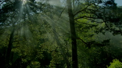 Altai morning fog in the forest Stock Footage