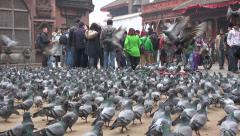Tourists feeding pigeons at Durbar Square in Kathmandu, Nepal Stock Footage