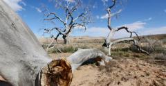 Badlands Wilderness Landscape Tree Graveyard Tracking Shot Stock Footage