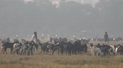 Farmers let their goats graze in a central park in Kolkata, India Stock Footage
