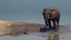 African Elephants near watering hole. Stock Footage