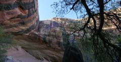 Canyon of Utah with Old Tree Panning to Alcove Up and Caves Stock Footage