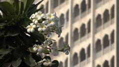 Mumbai, Taj Mahal Palace Hotel behind a white flower Stock Footage