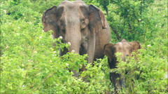 Indian elephants family in jungle Stock Footage