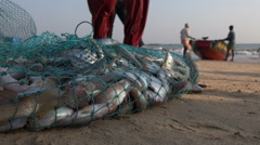 Freshly caught fish on the beach in Odisha, India Stock Footage