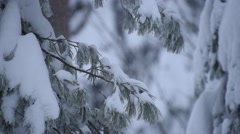 Heavy Snow Pine Branches - stock footage