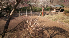 Motion Control Time Lapse of Japanese Plum Trees -Tilt Up/Pan Right- Tilt Up Stock Footage