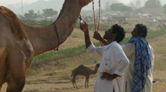 Barber trims the 'beard' of a camel at the Pushkar Camel Fair, India Stock Footage
