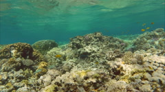 Fish swim among corals in the Red Sea - Egypt Stock Footage