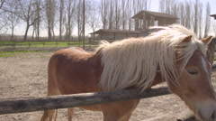 Brown horse resting near the fence of the pen in the wind - stock footage