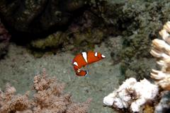 Attraction in the reef Stock Photos