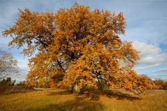 The fourth-hundredth autumn Stock Photos