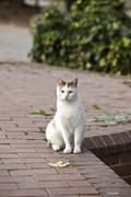 The Cats of Istanbul 14 - stock photo