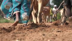 India farming cows plowing sowing crops farmers feet legs Stock Footage