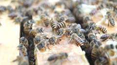 Bee activity on bee breeding box Stock Footage