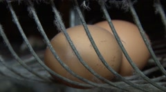 Laid eggs in tray - stock footage