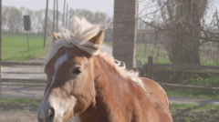 Brown horse with piece of wood plank in mouth Stock Footage