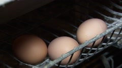 Eggs on farm closeup, clucking noise - stock footage