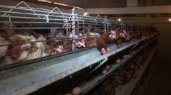 Egg farm, pan right - stock footage