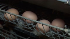 Egg production - stock footage