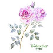 Gentle roses Stock Illustration