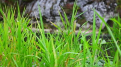 In a thicket of grass Stock Footage