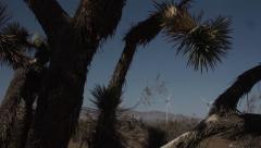 Wind Generators Framed Against Dying Joshua Tree Stock Footage