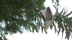 Bride shoes on a tree Stock Footage
