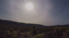 Tilt From Sun To Cholla Cactus Grove- Joshua Tree National Park Stock Footage