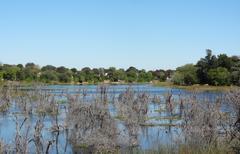 around Maun in Botswana - stock photo