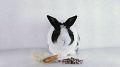 Rabbit sitting before eating Stock Footage