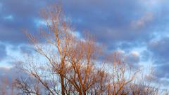 Sunset With Old Poplar Trees, Fluffy Clouds Drift by, Time Lapse Stock Footage