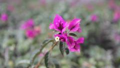 Flower blown by wind Stock Footage