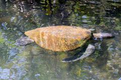 Sea Turtle Near Surface Stock Photos
