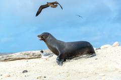 Sea Lion and Birds Stock Photos