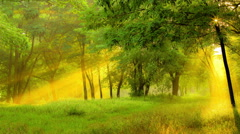 Sun rays light through the tree branch in the spring forest. Real time capture Stock Footage