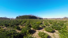 Growing christmas trees as a business Stock Footage