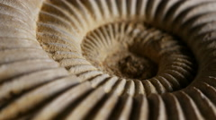 Ammonite fossil rotating, ECU, 4K, UHD Stock Footage