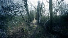 4k Small mysterious pathway with trees between ponds Stock Footage