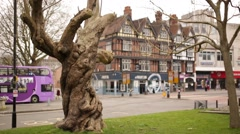 British Oak tree and Tudor architecture - stock footage